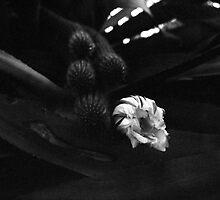 Bloom by AustinHolton