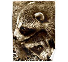 Raccoon Cuddle Poster