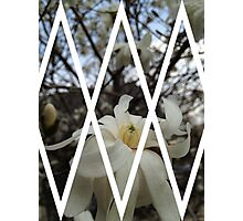 Continuation of the Magnoliation Photographic Print