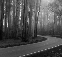 Toolangi State Forest II by lancewilliams