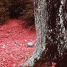 Red leaves forest by Guy Jean Genevier