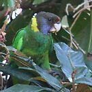 28 Parrot by Rick Playle