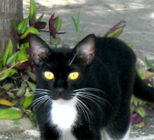 Carribean Cats Photographic Print