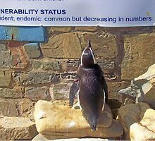 Newsflash!  Educated penguin reads about itself! by Teresa Schultz