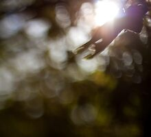 Dance of Light by LensCapOn