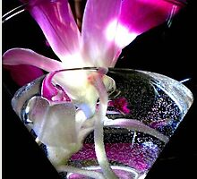 martini orchid by sheilamunk