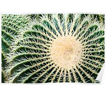 Barrel cactus Poster