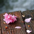 Fallen Petals by lizjensen
