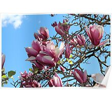 Nature - Pink flowers in full bloom Poster