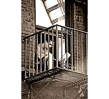 modern enslavement Photographic Print
