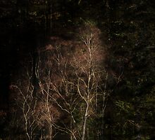 Forest 3 by David Robinson
