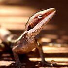 Lizard by assh0le