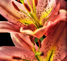 Lillies by Catherine Hamilton-Veal  ©