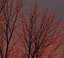Icy Trees at the End of the Day by Carole Brunet
