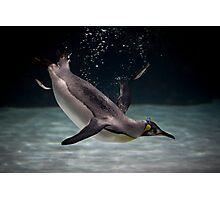 little diver Photographic Print