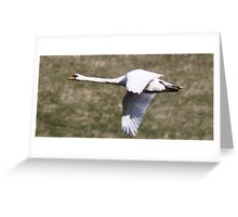 Swan in flight. Greeting Card