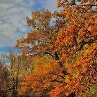 Autumn Pathway by RBFoto