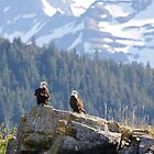 Bald Eagles by erbephoto