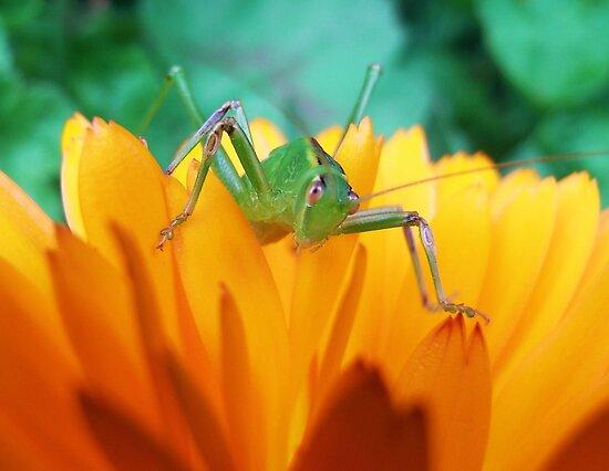 Green Hopper by JuliaWright