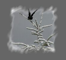 Black Bird Landing On Snow Covered Tree by Jonice