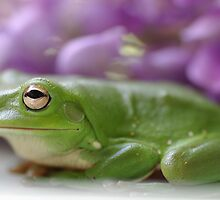 Cute little green frog! by Mark Jackson