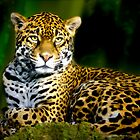 Jaguar by erbephoto