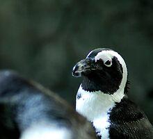Penguin by Aneurysm