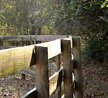 fence by evandaestes