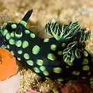 Green-Spotted Nudibranch by Dan Sweeney