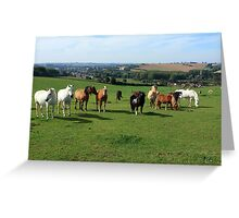 Rare Breeds Of Horses Greeting Card
