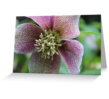Hellebore Flower Greeting Card