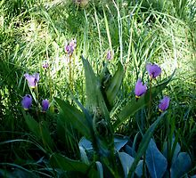lil wild teeny weeny purple flowers by boondockMabel
