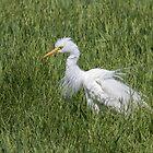 Ruffled Egret by Kym Bradley