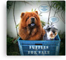 Puppies For Sale Canvas Print