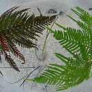 Fern out of sand sphere by Marilyn Baldey