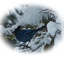 Bluejay In The Snow by Jonice