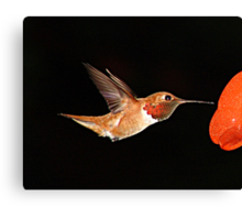 Hummer in Summer Canvas Print