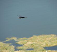 Flying Dragonfly by Garret