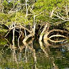 Mangrove reflections 3 by Woodgate