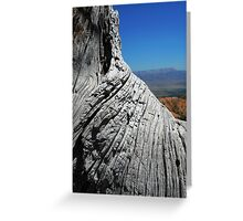 View of Bryce Canyon over Tree Trunk Greeting Card
