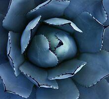 cactus by mariapar