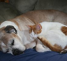 Strange Bedfellows by Laura J Smith
