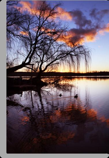 Mannum Willows by Steve Chapple