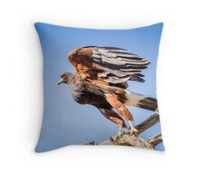 Harris's Hawk About to Launch Throw Pillow