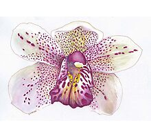 Leopard Lady Orchid Photographic Print