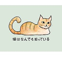 Cats Know Everything - Japanese Photographic Print