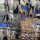 Montage - Elephants of Africa and India by cascoly