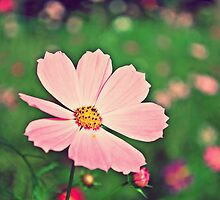 Pink Cosmos 4 ( without texture) by liyafendi