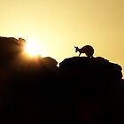 Kangaroo Sunrise by Reddirt
