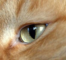 Eye of the Cat by Jarede Schmetterer